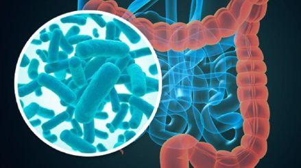 Microbiota intestinal: Clave para gozar de buena salud