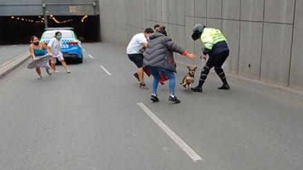 Surco: vecinos y serenos rescatan a perra que escapó de casa e ingresó al bypass del óvalo Higuereta