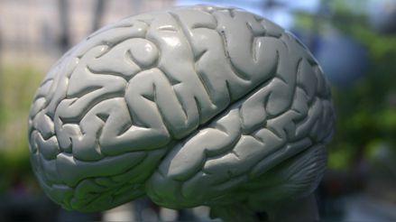 Nuestro cerebro cambia para bien y para mal