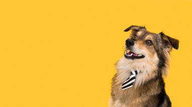 Mascotas: ¿Cómo mantener un adecuado estado de alerta en perros?