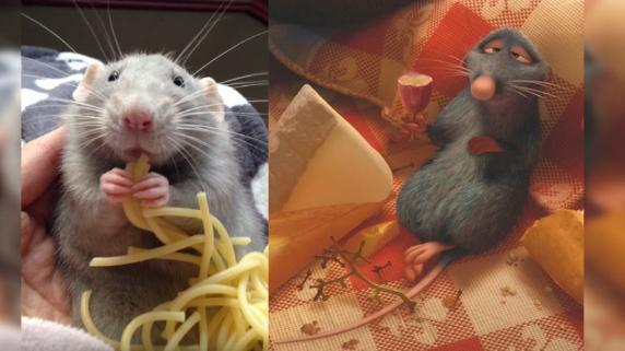 Video de ratón comiendo tallarines es viral