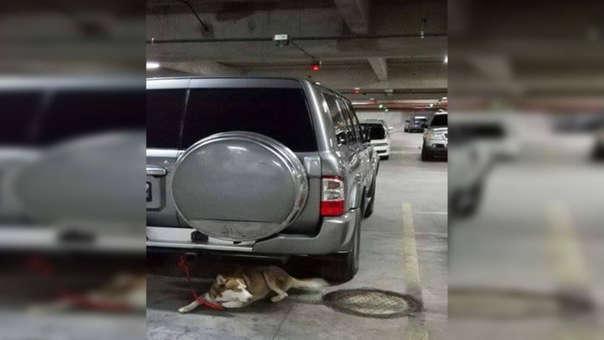 Mascota fue amarrada a una camioneta mientras su dueño se iba de compras