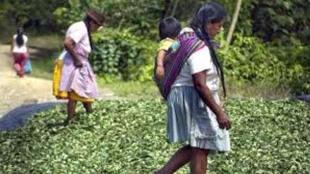 Piden mejores condiciones de vida para dejar coca.