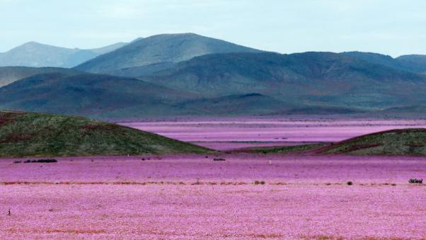 desierto_chile