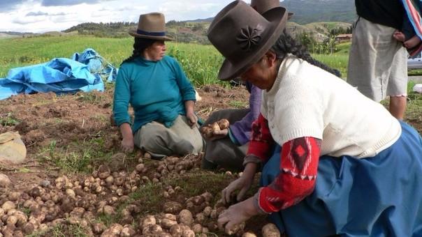 Fortalecen agricultura