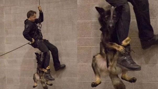 Perro que se aferra a la pierna de un policía se vuelve viral