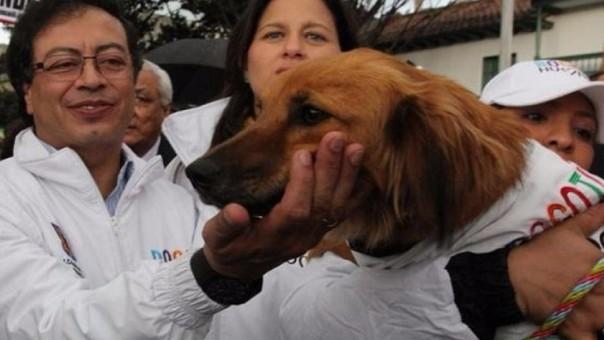 Se dará tratamiento y mascotas para posterior adopción.
