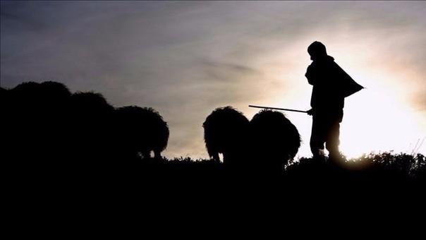 Mejoran salarios de ovejeros peruanos en Utah