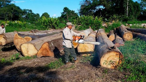 Tala ilegal de árboles