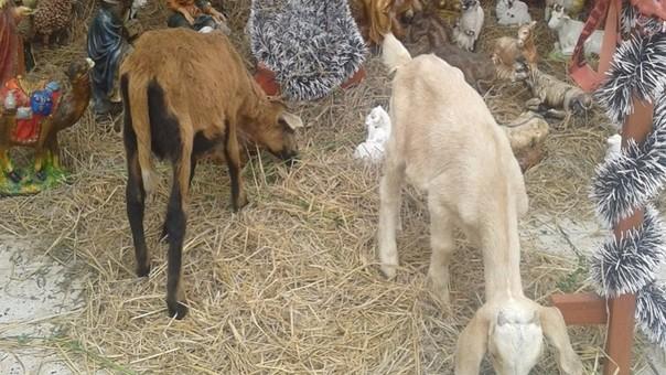 Animales en nacimiento