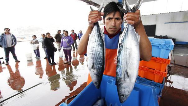 Pesca de bonito alcanzó cifra histórica el 2015.