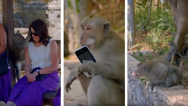 Mono es un experto ladrón