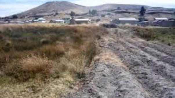 Agencias agrarias repostaron pérdidas en cultivos de pan llevar.
