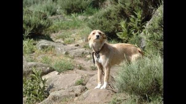 Es el segundo caso de rabia canina que se presenta en la provincia de Melgar.