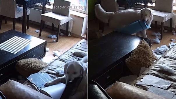 Perrito fue dejado solo y aprovechó para poner la casa 'patas arriba'
