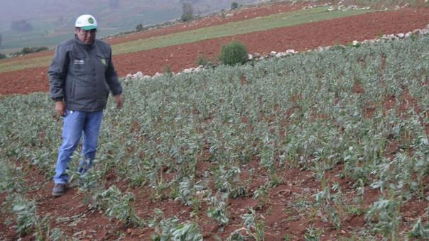 Agricultura en Tarma