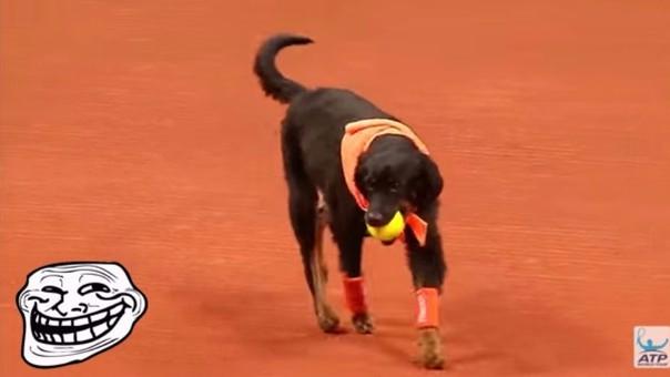 Los perros recogebolas en el Abierto de Brasil