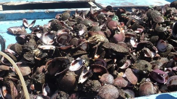 Mortandad de moluscos