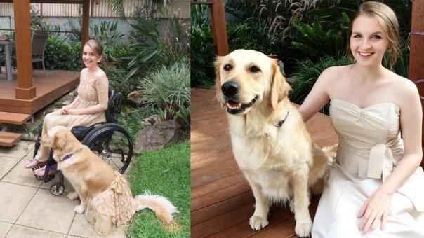 Lacey es un perro de servicio de tres años de edad