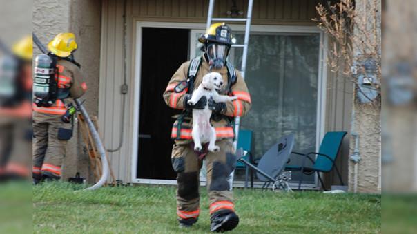 Los bomberos pudieron contener rápidamente las llamas y rescatar al cachorro de la familia