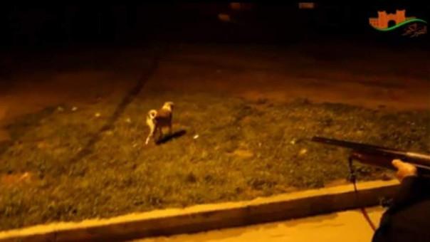 Indignación por marroquíes que mataron perros callejeros