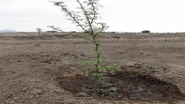 Importante proceso de reforestación.