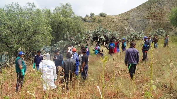 Las langostas arrasaron con 30 hectáreas de vegetación de la comunidad Huanipa-Chilmay