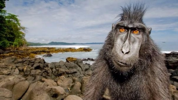 La travesura de un mono dejó sin luz a toda Kenia