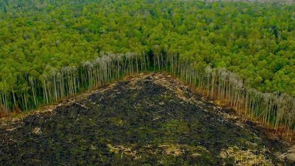 La deforestación sigue azotando la Amazonía