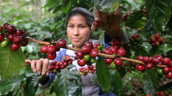 Café peruano.