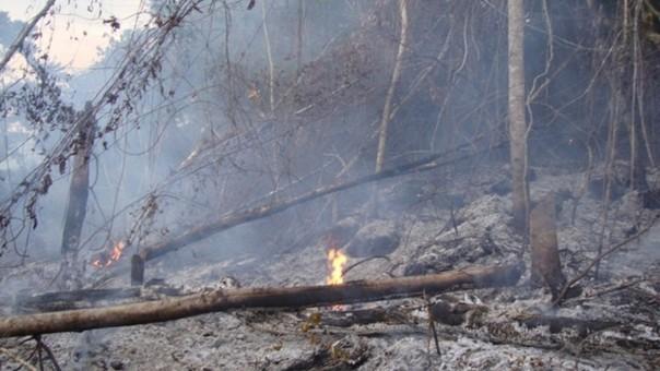 Incendios forestales afectaron bosques de San Martín.