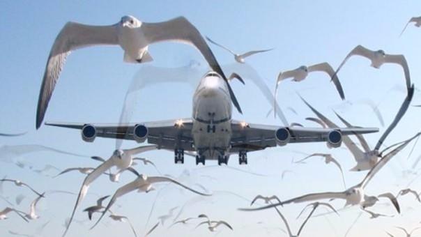 Un avión tuvo que aterrizar luego de que una ave impacte su turbina y ocasione un incendio