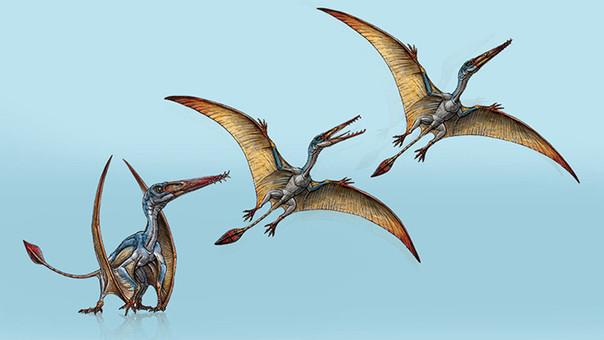 Allkauren koi es el nombre que los paleontólogos le han puesto a esta nueva especie de reptil volador descubierta en la Patagonia.