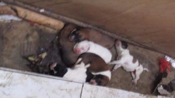 Rescatan cachorros en mercado