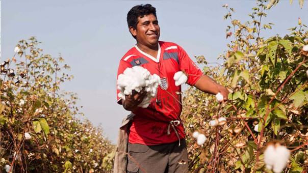 El algodón representa una de las principales agroexportaciones peruanas.