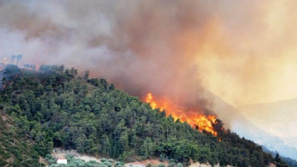Pérdidas por 50 mil dólares dejó un Incendio Forestal en Quinuamayo (foto referencial)