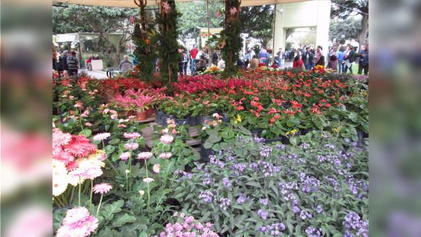 Cada 23 de Setiembre, se celebra en el Perú el inicio de la primavera, de la amistad y de la juventud.
