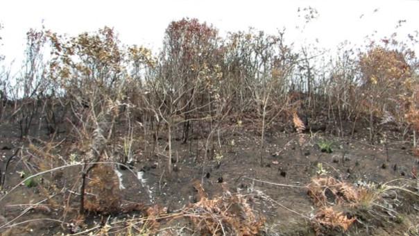 Incendio forestal causó pérdidas económicas considerables