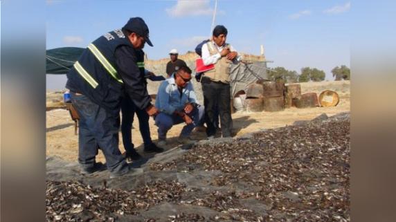 Intervienen dos plantas procesadoras de harina de pescado.