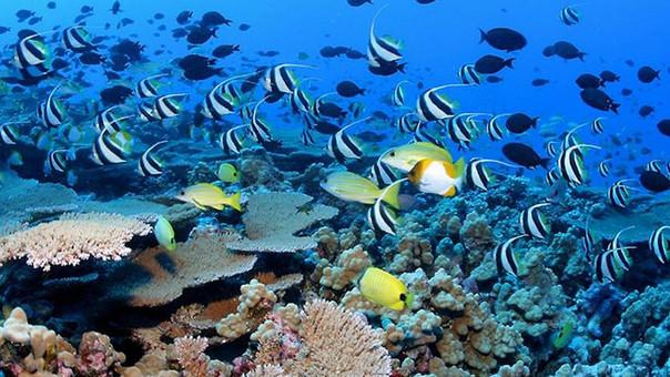 Las especies marinas en riesgo por la acidificación del agua.