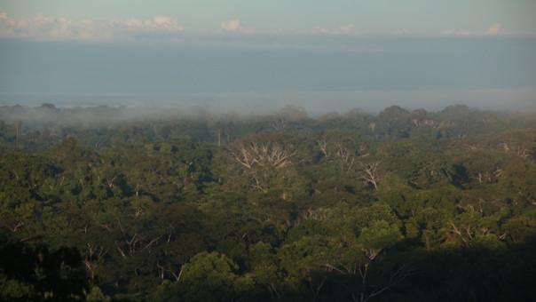 Los Amigos es considerado un éxito en la conservación del Perú.