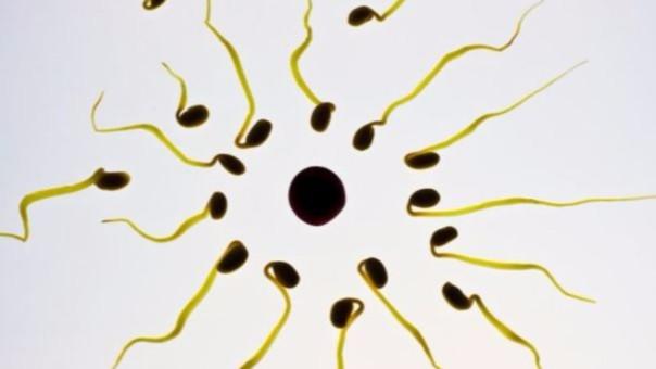 La ciencia sigue intentando desarrollar un método anticonceptivo para hombre de confianza.