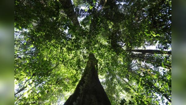 Bosques vs. comida chatarra
