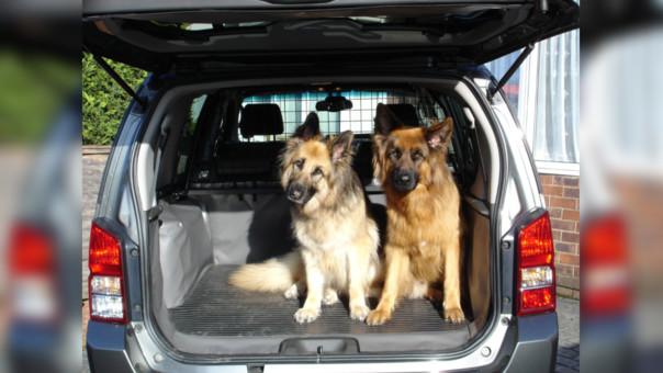 Viajar con mascotas es divertido Viaja en auto con tu mascota