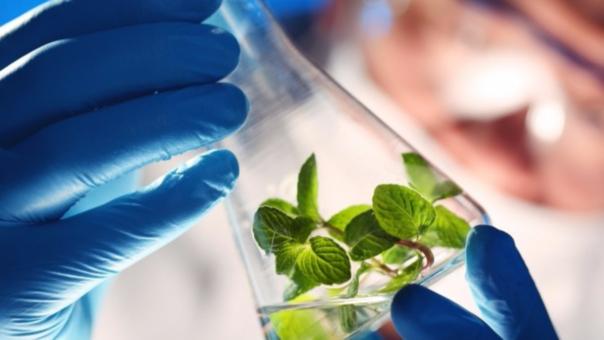 Los biotecnólogos pueden ejercer en rubros como la industria farmacéutica, agricultura, la producción de alimentos y hasta la protección del medio ambiente.