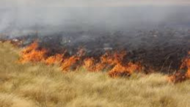 Incendio de pastizales fue controlado gracias al trabajo conjunto