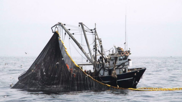 Entre los productos que estarían pescando las embarcaciones asiáticas destaca la pota.