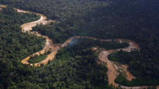 Los bosques en Brasil han sido afectados en casi 8,000 kilómetros cuadrados.