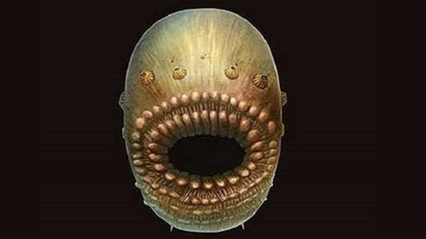 Así habría sido el Saccorhytus coronarius, el antepasado de todos los vertebrados.