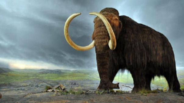 ¿Regresan los mamuts? Un equipo científico pretende 'resucitarlos' en dos años